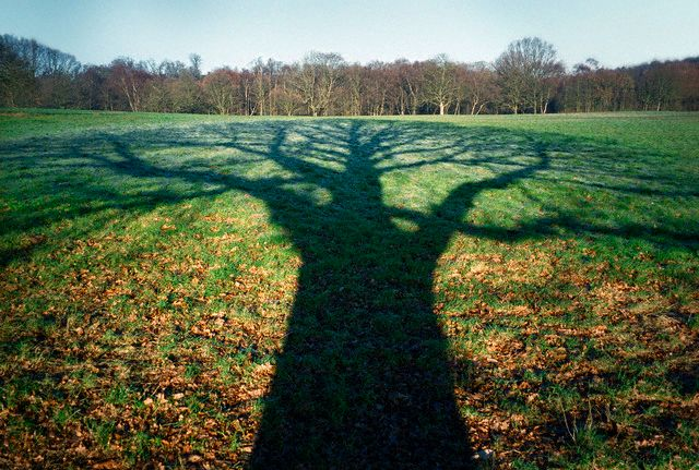 Shadow of Tree Reflected on Ground