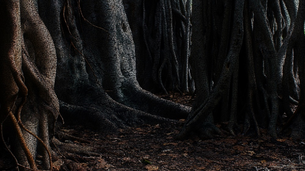 forest of silence